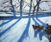 Andrew Macara - Sheep in snow