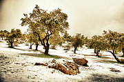 Landscape In Israel Prints - Snow In Jerusalem 21 Print by Benny  Woodoo