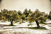 Landscape In Israel Prints - Snow In Jerusalem 4 Print by Benny  Woodoo