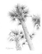 Florida Drawings - South Carolina - Sabal Cabbage Palm by Jim Hubbard