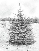 Dakota Drawings - South Dakota-Black Hills Spruce by Jim Hubbard