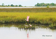 Spoonbill Drawings Metal Prints - Spoonbill Savannah Metal Print by Alex Suescun
