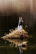 Lakes - Streams - Waterfalls - Spring Marsh Stump by Albert Seger