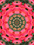 Photo Manipulation Mixed Media Framed Prints - Spring Tulip Kaleidoscope Framed Print by Roxy Riou