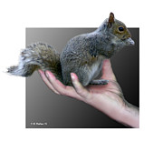 Fx Framed Prints - Squirrel in Hand Framed Print by Brian Wallace