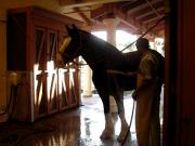 Linda Knorr Shafer - Stable Groom - 1
