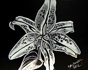 Star Drawings Framed Prints - Star Gazer lily Framed Print by Lisa Brandel