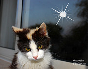 Augusta Stylianou - Starry Cat