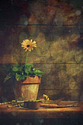 Left Posters - Still life of yellow Gerbera daisy in clay pot Poster by Sandra Cunningham