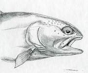 Trout Drawings - Streamside Rainbow by Jeremiah Welsh