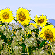 Sunflowers Sunbathing Fine Art Print by Artist and Photographer Laura Wrede