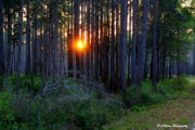Barbara Bowen - Sunset along the Florida Trail -...