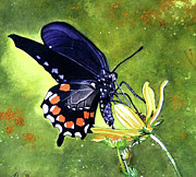 Donna Wiegand - Swallowtail Butterfly