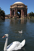 Wingsdomain Art and Photography - Swan at The San Francisco Palace of...
