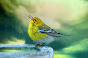 Warbler Photos - Sweet Little Warbler by Bonnie Barry