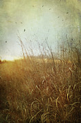 Painterly Posters - Tall grass growing in late autumn Poster by Sandra Cunningham