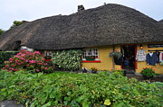 Adare Acrylic Prints - Thatched cottage Acrylic Print by Herman Hagen
