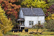 Debra and Dave Vanderlaan - The Cows Came Home