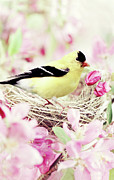 Pink Flower Branch Art - The Little Finch by Stephanie Frey