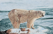 Polar Bears Paintings - The Polar Bear by Jim Barber Hove