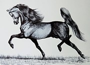 Horses Drawings Metal Prints - The Spirited Arabian Horse Metal Print by Cheryl Poland