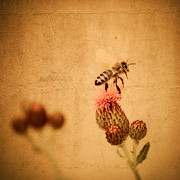 The Thistle And The Bee Fine Art Print by Mandy Tabatt