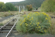 Jerry McElroy - The Tracks at Pagosa Junction