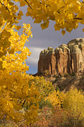 Four Corners Photos - The Yellow Leaves Of Fall Frame A Rock by Ralph Lee Hopkins