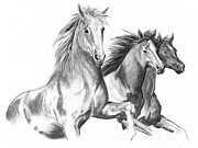 Horses Drawings - Three by Adam Lennon