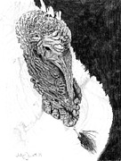 Turkey Drawings Metal Prints - Tom Turkey Metal Print by Judy Garrett