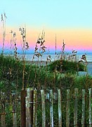 Julie Dant - Topsail Island Dunes and Sand Fence