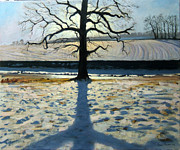 Andrew Macara - Tree and Shadow Calke Abbey Derbyshire