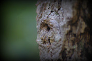 Marilyn Wilson - Tree Face