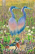Cypress Tree Drawings - Tricolored Herons with Wood Ducks by Tim McCarthy