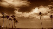 Cheryl Young - Tropical Mood Sepia