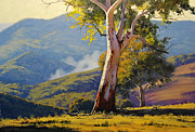 Koala Paintings - Turon Gum Tree by Graham Gercken