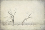 Jeff Swanson - Two Trees in a Field