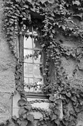 Suzanne Gaff - Vine-covered Mysteries - black and white