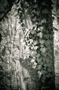 Silvia Ganora - Vine on tree