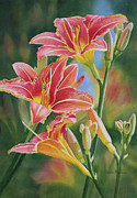 Sharon Freeman - Vintage Red Orange Lilies