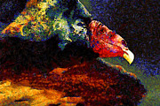 Wingsdomain Art and Photography - Vulture In Van Gogh.s Dream . 40D8879