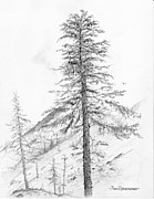 Jim Hubbard Metal Prints - Western Hemlock Metal Print by Jim Hubbard