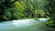 Ian Rasmussen - Whirinaki River - photo prints NZ