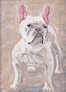 Arthur Rice - White Frenchie