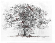 Illinois Drawings - White Oak by Jim Hubbard