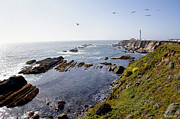 Mick Anderson - Wide Angle of Pt Arena Lighthouse