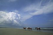 Wild Horses Photo Framed Prints - Wild Horses Roaming A Georgia Coast Framed Print by Michael Melford