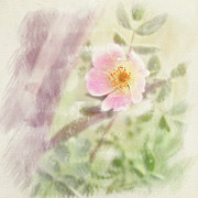 Richard Piper Art - Wild Rose by Richard Piper