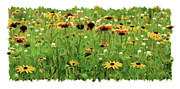 Yellow Flowers Framed Prints - Wildflower Meadow Framed Print by JQ Licensing
