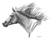 Horse Drawings Framed Prints - Wind in his Mane  Framed Print by Adam Lennon
